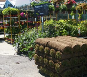 Find a garden center - Saratoga Sod