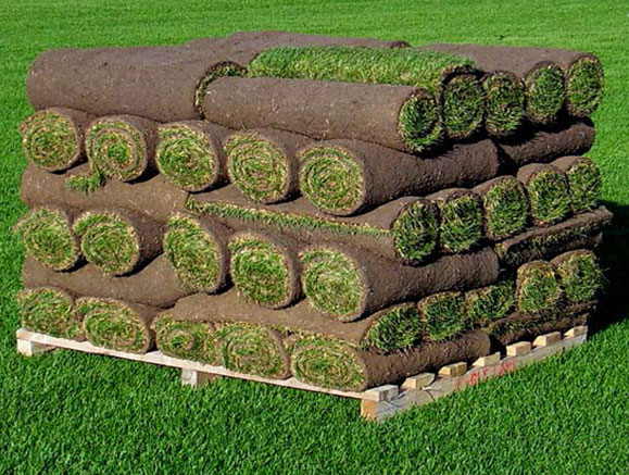 pallet of small grass rolls of sod