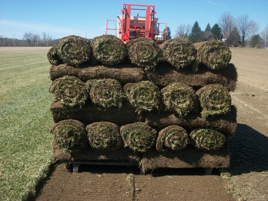 Harvesting-pallet-of-small-rolls-1024×768