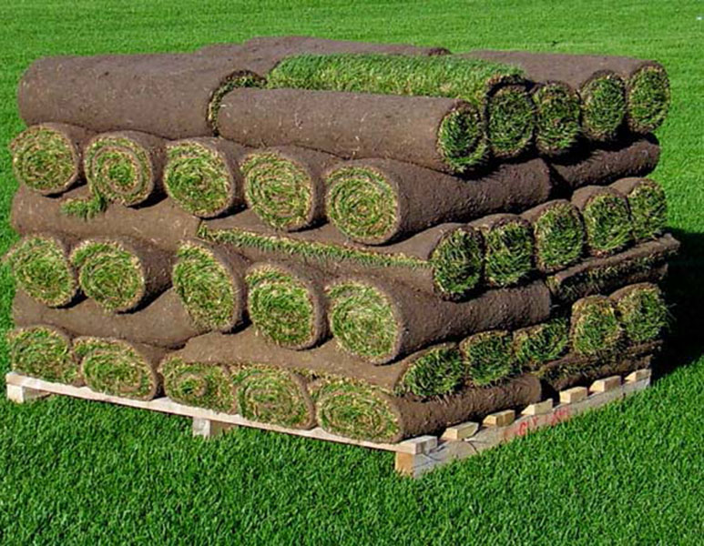 A Pallet of Small Grass Rolls of Sod