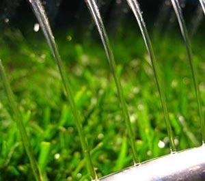 sprinkler watering new sod
