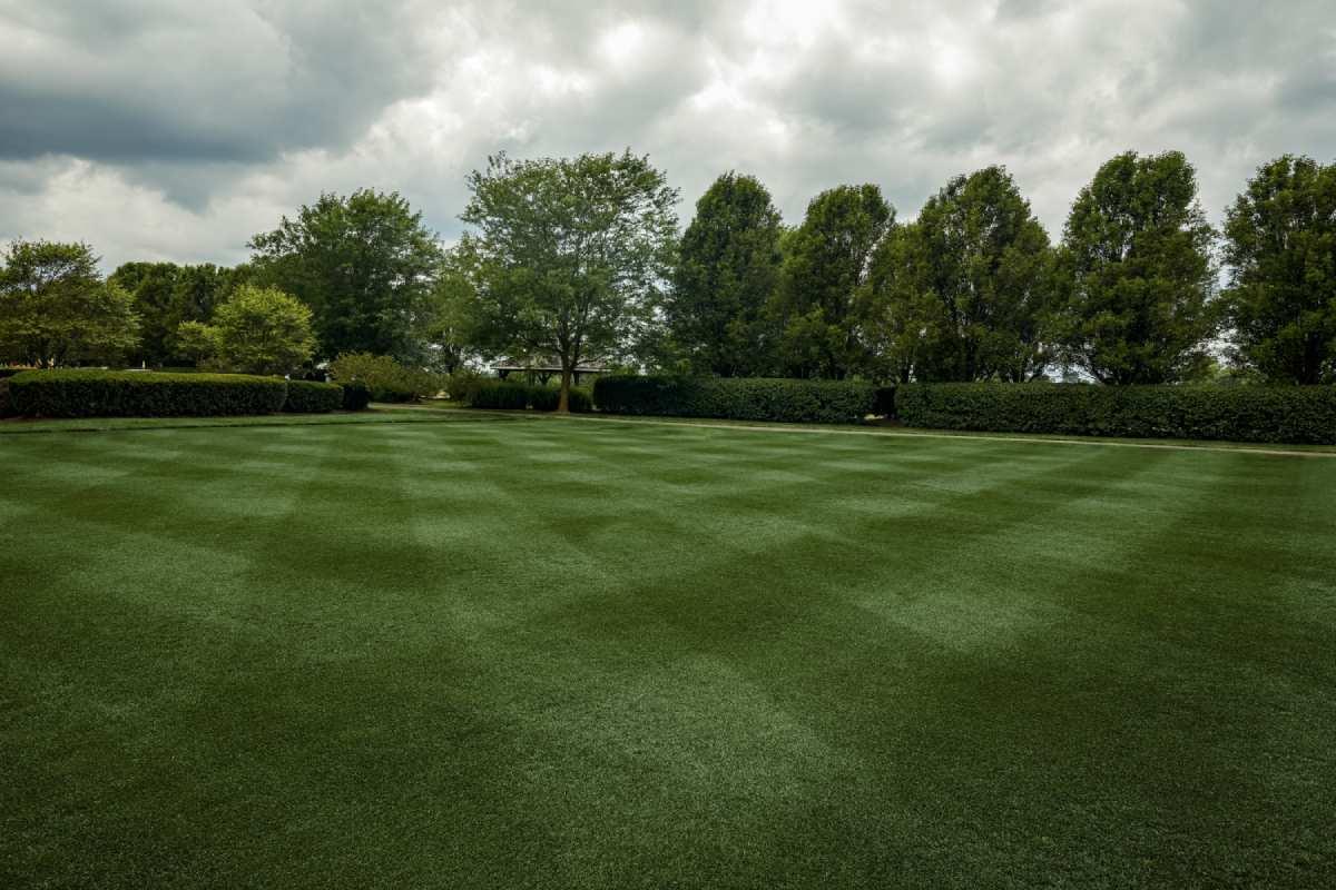 lawn made of ProVista Kentucky Bluegrass sod